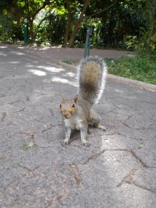 Sqirrel in the Campany's Garden, Cape Town